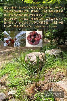 ナツメヤシの木-b_聖句入りハガキ_2014-0409.jpg