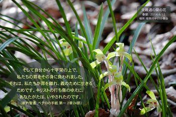 受難週の蘭の花-聖句絵はがき-b_2014-0415.jpg